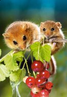 Hazel Mouse with Cub